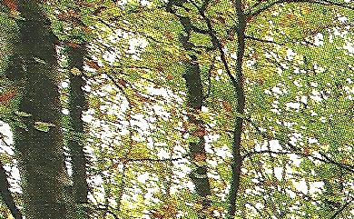 la-fageda-de-jorda-parque-naturalo-de-la-zona-volcanica-de-la-garrotxa